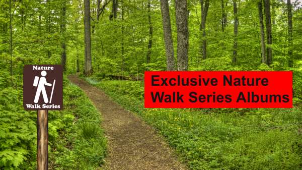 Our Exclusive Nature Walk Series Albums Take You on Virtual Nature Hikes on Real Trails