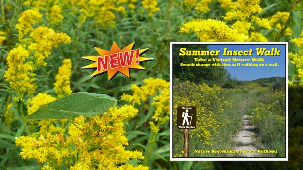 New Album: Summer Insect Walk. Talk a Night Walk Enjoying the Sounds of Insects